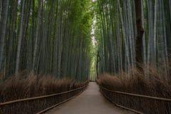Arashiyama bamboo forest in Kyoto, Japan stock photos