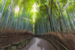 Arashiyama Bamboo. Forest  in Arashiyama, Kyoto, Japan. Arashiyama is well known as a pure environment area in Kyoto Stock Images