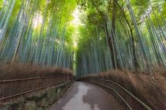 Arashiyama Bamboo Stock Images