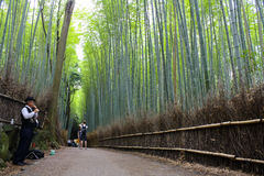 Arashiyama Bamboo Forest. A man plays an instrument while tourists take photos while along the Arashiyama Bamboo Forest trail. This particular Bamboo forest is Stock Photo