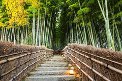 Arashiyama Bamboo Forest path, Kyoto. Arashiyama Bamboo Forest and autumn foliage path at Adashino Nenbutsuji Temple, Kyoto, Japan Royalty Free Stock Photos