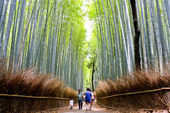 Arashiyama Bamboo Forest. People of all ages walk through Kyoto`s Arashiyama Bamboo Forest. This particular Bamboo forest is one of Kyoto`s most popular Stock Photos