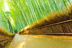 Arashiyama Bamboo Forest Road Grass Fence Tilted. Straight path lined by grass fence and tall bamboo trees in the morning at Arashiyama Bamboo Grove forest in Stock Image