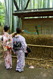 Arashiyama Bamboo Forest. Two women in traditional kimono figure their way through Kyoto`s Arashiyama Bamboo Forest. This particular Bamboo forest is one of Royalty Free Stock Photos