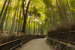 Arashiyama bamboo forest with walking pass. In Kyoto, Japan Stock Photo
