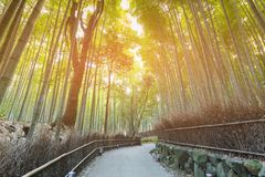 Arashiyama bamboo forest with walking path. Kyoto Japan natural landscape background Royalty Free Stock Images
