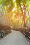 Arashiyama Bamboo Forest with walking way. Kyoto Japan Royalty Free Stock Photos