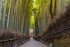Arashiyama bamboo forest and walking way in Kyoto. Japan, natural landscape background Stock Images