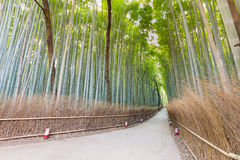 Arashiyama bamboo forest with walking way l. Eading to public park, Kansai Japan Stock Image