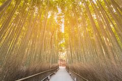 Arashiyama bamboo forest with walkway. Zen garden background Royalty Free Stock Photo