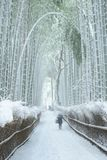 Bamboo forest in snow Royalty Free Stock Image