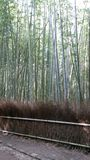 Arashiyama Royalty Free Stock Photos
