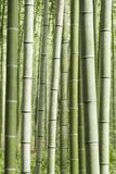 Arashiyama Bamboo Grove Japan. Arashiyama Bamboo Grove also called Sagano Bamboo Forest in Arashiyama. Kyoto, Japan Royalty Free Stock Photography