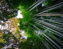 Arashiyama bamboo grove in Kyoto, Japan. Arashiyama bamboo grove at autumn in Kyoto, Japan. On CNN, Arashiyama was referred to as one of the most beautiful Royalty Free Stock Photo