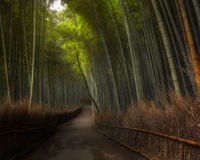 Arashiyama Bamboo Grove. In autumn, Arashiyama, Western Kyoto, Japan Stock Images