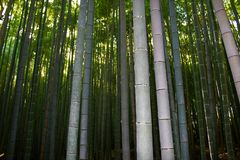 Arashiyama Bamboo Grove . Bamboo Forest . Kyoto . Japan. The Arashiyama Bamboo Grove . Bamboo Forest . Kyoto . Japan Stock Image
