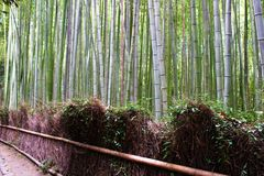 Arashiyama Bamboo Grove . Bamboo Forest . Kyoto . Japan Stock Images
