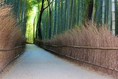 Arashiyama Bamboo Grove . Bamboo Forest . Kyoto . Japan Royalty Free Stock Images