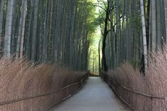 Arashiyama Bamboo Grove . Bamboo Forest . Kyoto . Japan Stock Photos