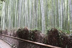 Arashiyama Bamboo Grove . Bamboo Forest . Kyoto . Japan Stock Photo