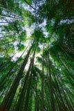 Arashiyama bamboo grove Royalty Free Stock Photos