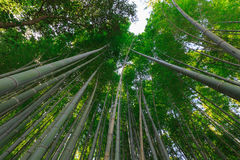 Arashiyama bamboo grove Stock Photo