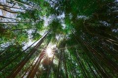 Arashiyama bamboo grove Royalty Free Stock Photo