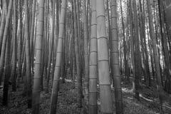 Arashiyama bamboo grove Stock Photography