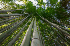 Arashiyama bamboo grove. The famous bamboo footpath at Arashiyama Kyoto Japan Royalty Free Stock Images