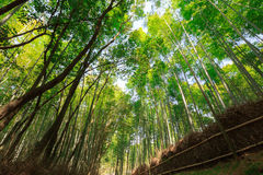 Arashiyama bamboo grove Stock Photos
