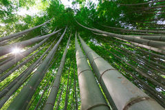 Arashiyama bamboo grove. The famous bamboo footpath at Arashiyama Kyoto Japan Stock Images