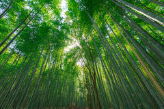 Arashiyama bamboo grove. The famous bamboo footpath at Arashiyama Kyoto Japan Royalty Free Stock Photography