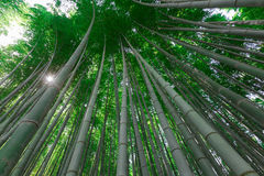Arashiyama bamboo grove Royalty Free Stock Images