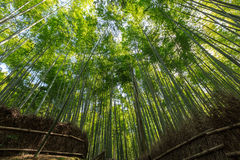 Arashiyama bamboo grove. The famous bamboo footpath at Arashiyama Kyoto Japan Royalty Free Stock Photos