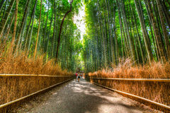 Arashiyama bamboo grove. The famous bamboo footpath at Arashiyama Kyoto Japan. HDR shot Royalty Free Stock Photos