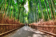 Arashiyama bamboo grove, HDR. The famous bamboo footpath at Arashiyama Kyoto Japan. HDR shot Stock Images