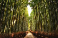 Arashiyama Bamboo Grove Kyoto. Taken in 2011 Royalty Free Stock Photography