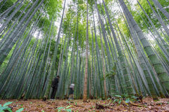 The Arashiyama Bamboo Grove of Kyoto with blurred tourists, Japan. Stock Images