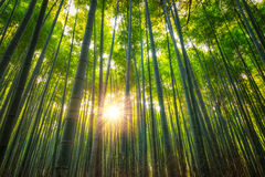 Arashiyama Bamboo Grove. The Arashiyama Bamboo Grove of Kyoto, Japan Stock Photo