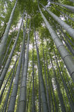 Arashiyama bamboo grove Stock Photography