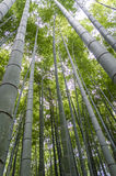 Arashiyama bamboo grove Stock Photo