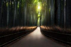The arashiyama. Bamboo Grove of Kyoto, Japan Stock Images