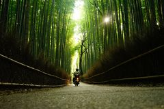 Arashiyama Bamboo. Grove in Kyoto Japan Stock Image