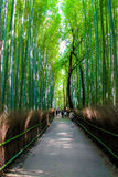 The Arashiyama Bamboo Grove , kyoto, Japan Stock Photography