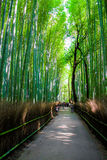 The Arashiyama Bamboo Grove , kyoto, Japan Royalty Free Stock Photos