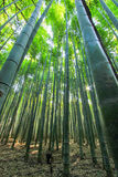 Arashiyama Bamboo Grove,Kyoto,Japan Royalty Free Stock Image