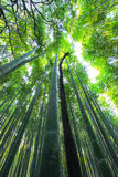 Arashiyama Bamboo Grove,Kyoto,Japan Royalty Free Stock Images