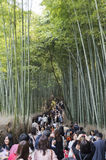 Arashiyama bamboo grove. The Arashiyama Bamboo Grove of Kyoto, Japan. People along the footpath Royalty Free Stock Image