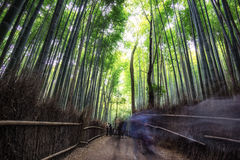 Arashiyama bamboo grove. In kyoto, japan. Tall bamboo trees surrounding the small pathway with lots of tourists Royalty Free Stock Image