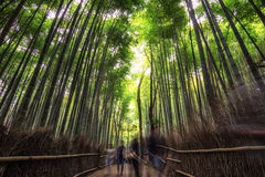 Arashiyama bamboo grove. In kyoto, japan. Tall bamboo trees surrounding the small pathway with lots of tourists Stock Images